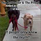 The Rottweiler and the Pitbull