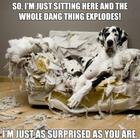 dog and easy chair