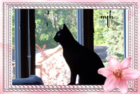 myphoto_001.png