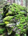 Mossy rocks in the woods