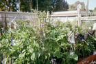 My Gardens in our Farm- '10-2014'