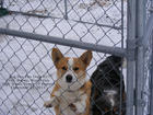 UPDATE ON TWO DOGS IN PEN