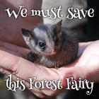 TWS-FairyPossum2_250.jpg