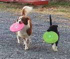 My girls with their Frisbees