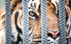 Ban Wild Animals in Circuses