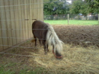 pony at days end farm fall festival 09 24 2011.png