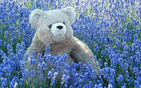 teddy-bear-i-miss-you-blue-flowers.jpg