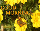 GOOD MORNING BEAUTIFUL PATTERED BUTTERFLY