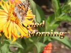 GOOD MORNING LOVELY BUTTERFLY~