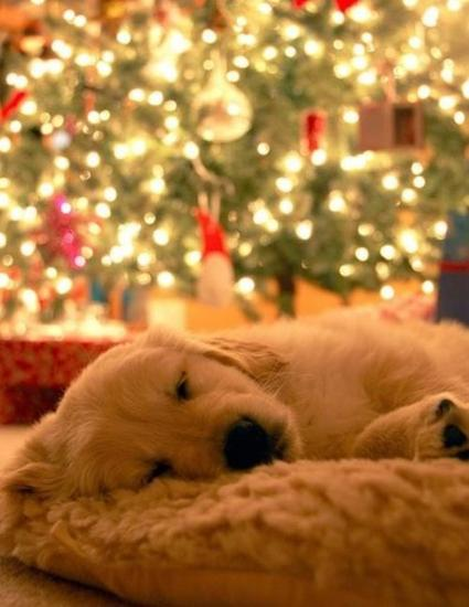 puppy-Christmas-lights.jpg