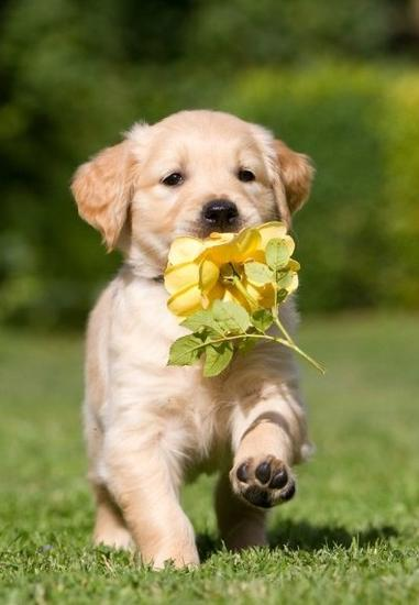 dog_flower_yellow.jpg