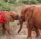 Mbegu watches after baby Ndotto