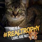 Savana joined campaign to STOP CANNED LION HUNTING!