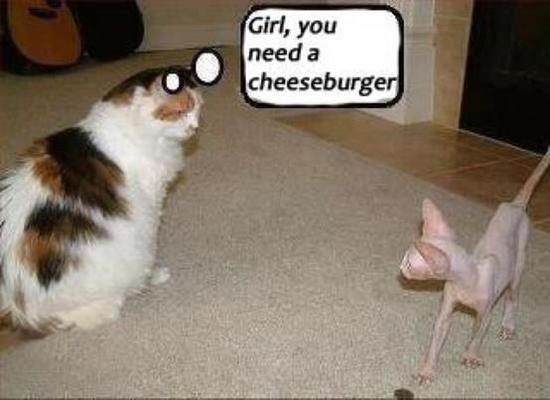 U Need a Cheeseburger.jpg