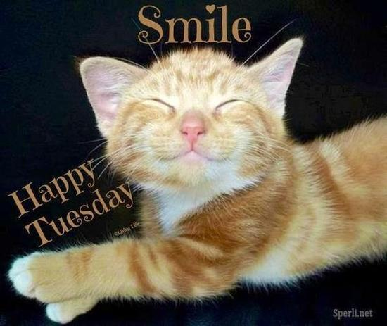 smile happy tuesday cat
