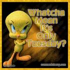 TUESDAY-WITH-TWEETY_001.jpg