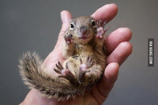 tiny squirrel.jpg