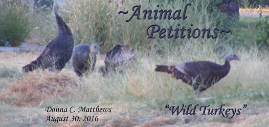 ANIMAL PETITIONS FOR SEPTEMBER