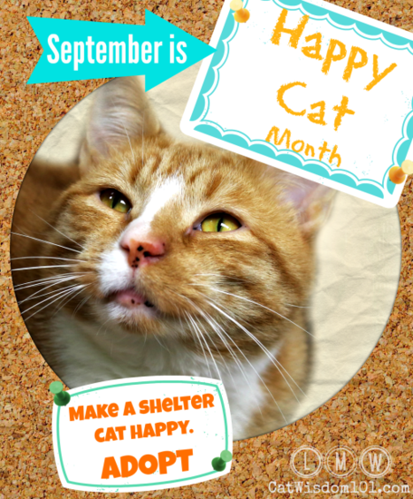 Happy-Cat-Month1-510x615.png