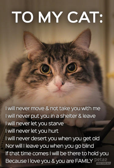 to my cat.jpg