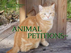ANIMAL PETITION FERAL CAT