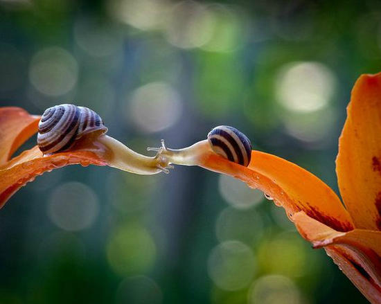kissing snails _1_.jpg