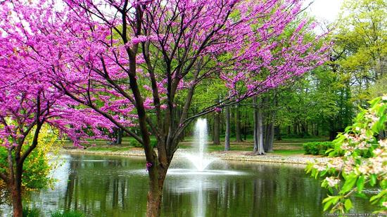 beautiful-spring-wallpapers-8.jpg