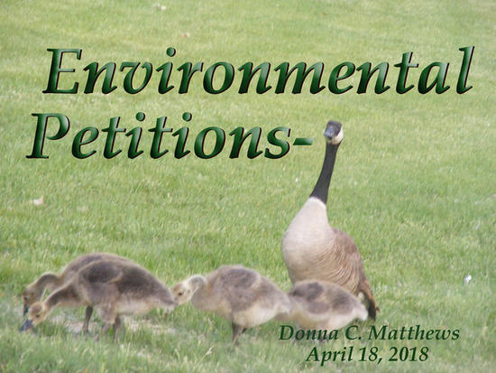 GEESE FAMILY ENVIRONMENTAL PETITION