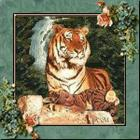 """Tigers Beauty"""