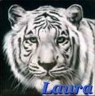Laura white tiger