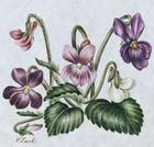 March's Flower The Violet.jpg