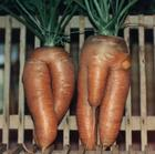Mr-n-Mrs carrot.jpg