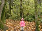 Big forest, little girl.jpg