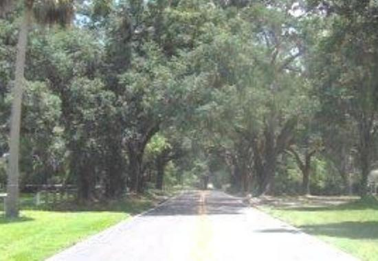 Tree Covered Road into Winter Garden Florida
