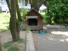 House 4 Street Dogs- Dorcol