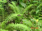 Another different one on the Ferns