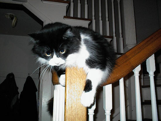 Gizmo on the banister