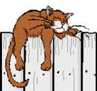 cat on fence.bmp