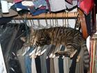 closetcat.jpeg
