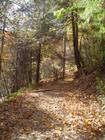 fall leaves on the trail