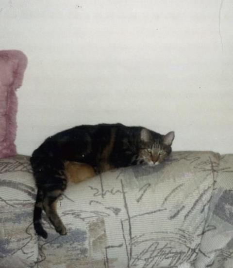 Tiberious the lazy cat!
