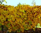 Garland of Leaves in the Autumn in Taylorsville, Utah