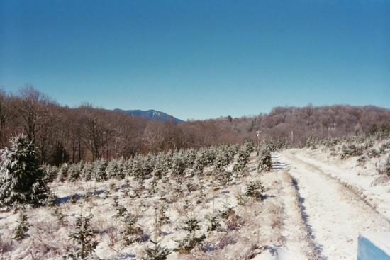 Little Switzerland Christmas Tree Farm