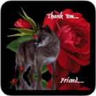Thank You Rose & Wolf