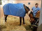 The Vet Had High Hopes For Barbaro....