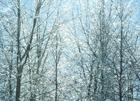 ice on the trees over in the park  20.jpg