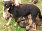 2007 animal rescues begin