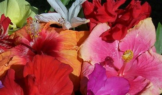flower_colours_2.jpg