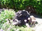 volcanic rock and flower