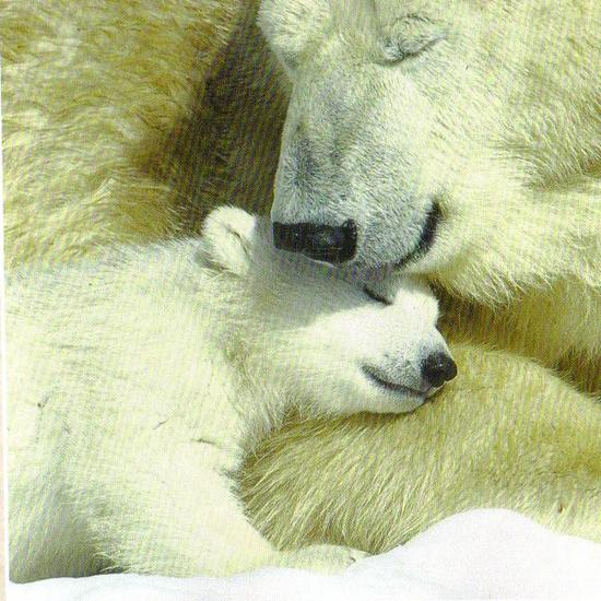 Polar Bear and Cub.jpg